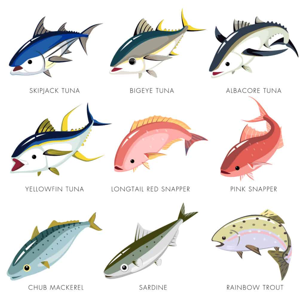 Types and Sources of Tuna