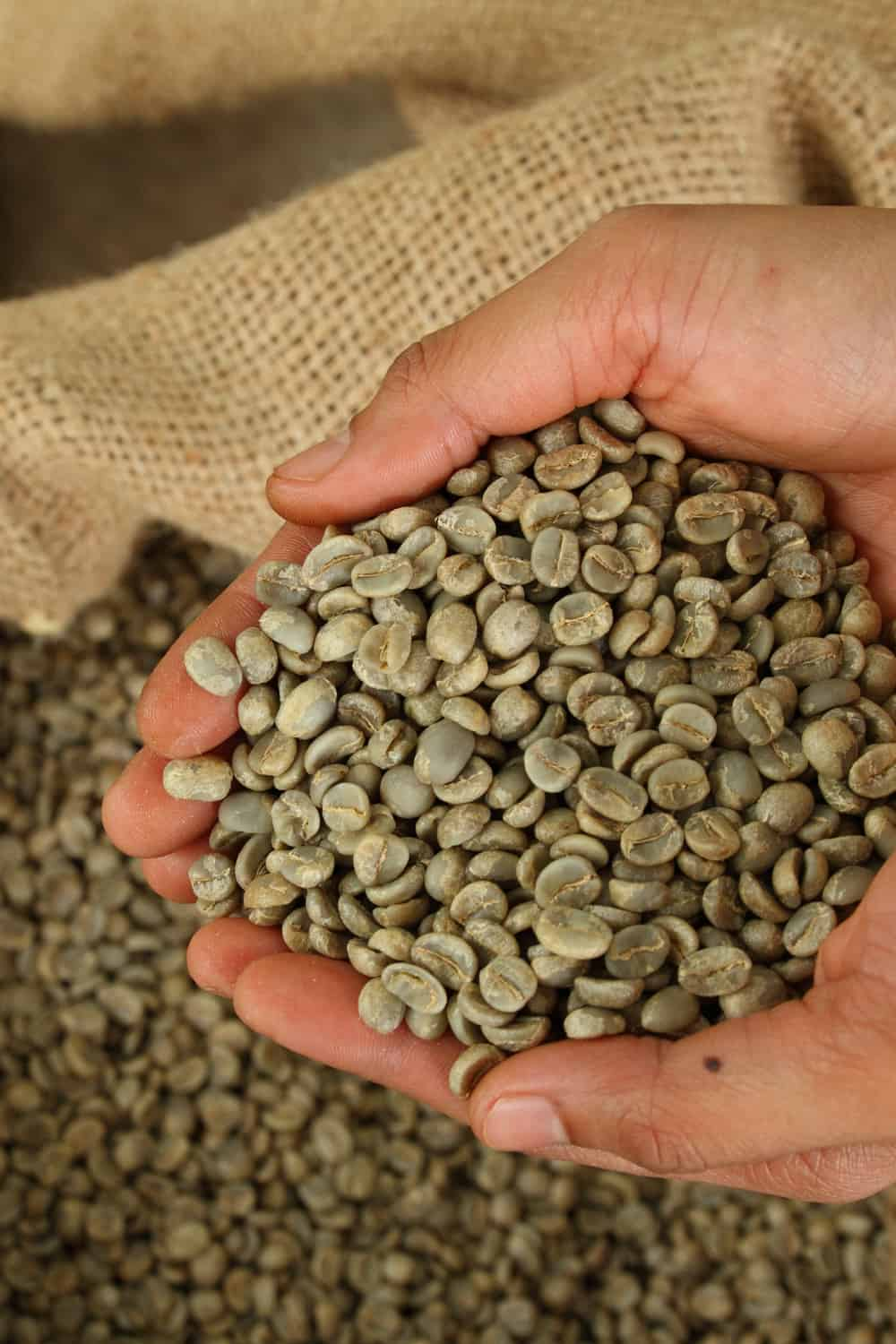 The post-harvesting process affects how coffee should be roasted