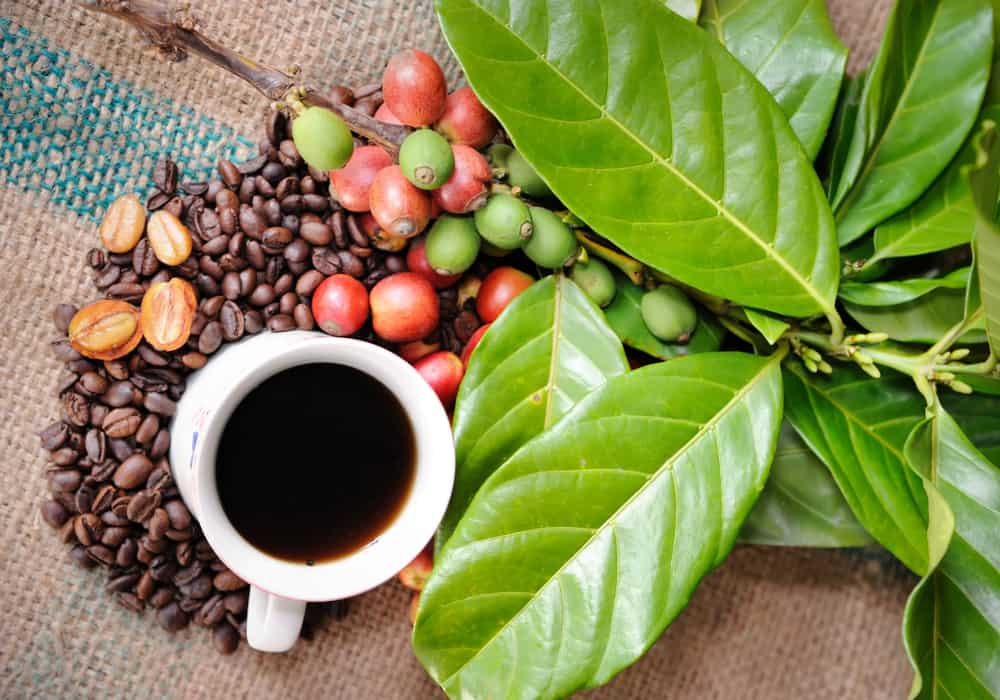 Organic Coffee vs. Conventional Coffee What's the Difference