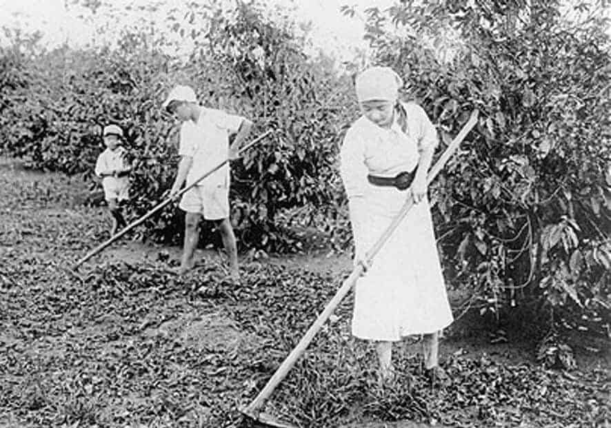 The History Of Coffee Production In Brazil