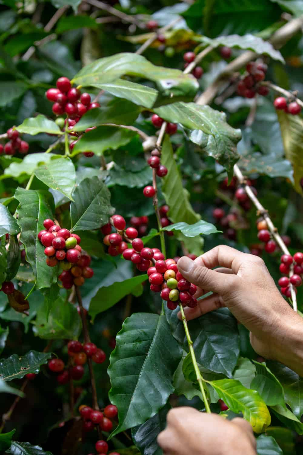 The current state of the coffee market