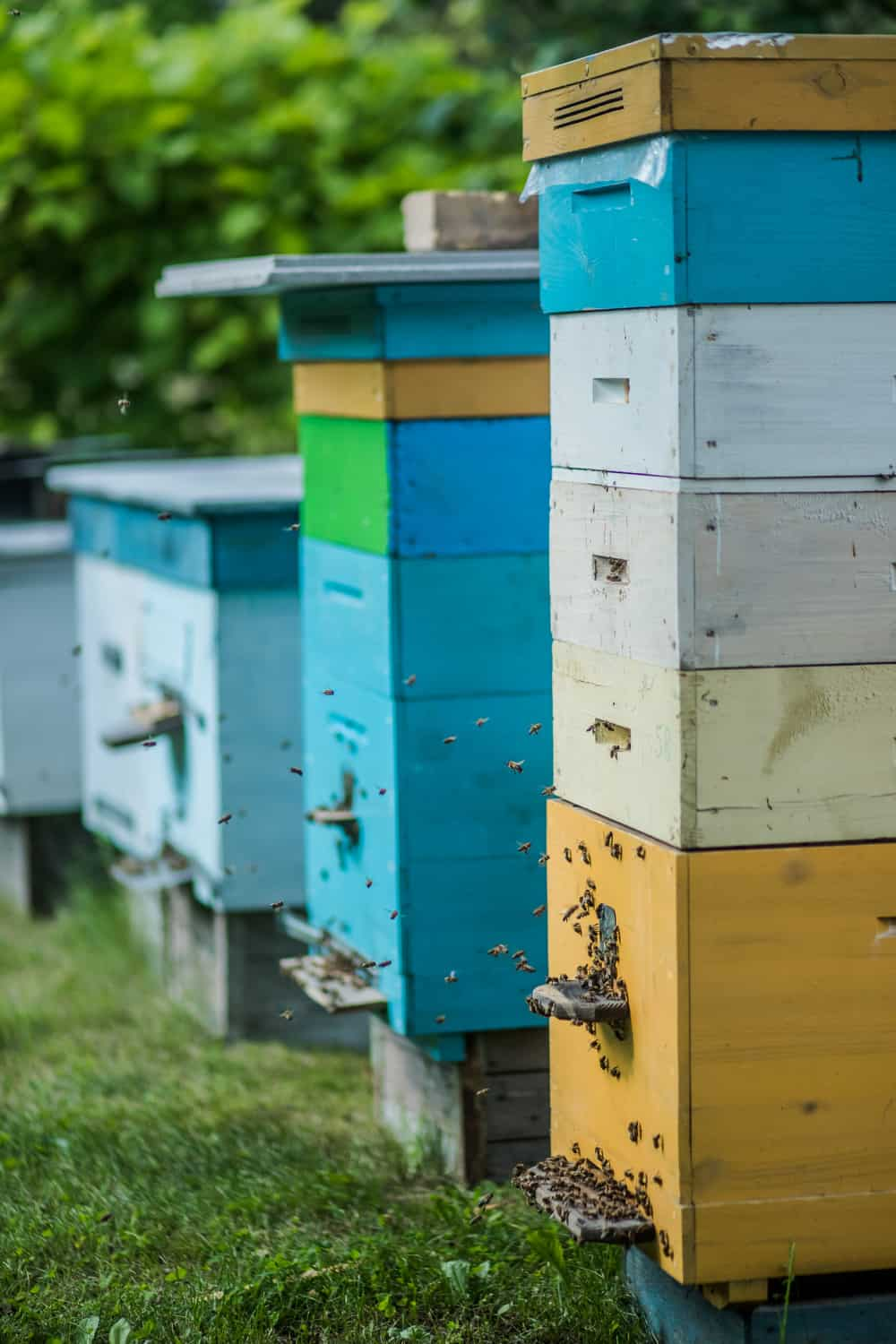 19 Homemade Beehive Plans You Can DIY Easily