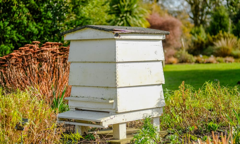 Build Your Own Beehive
