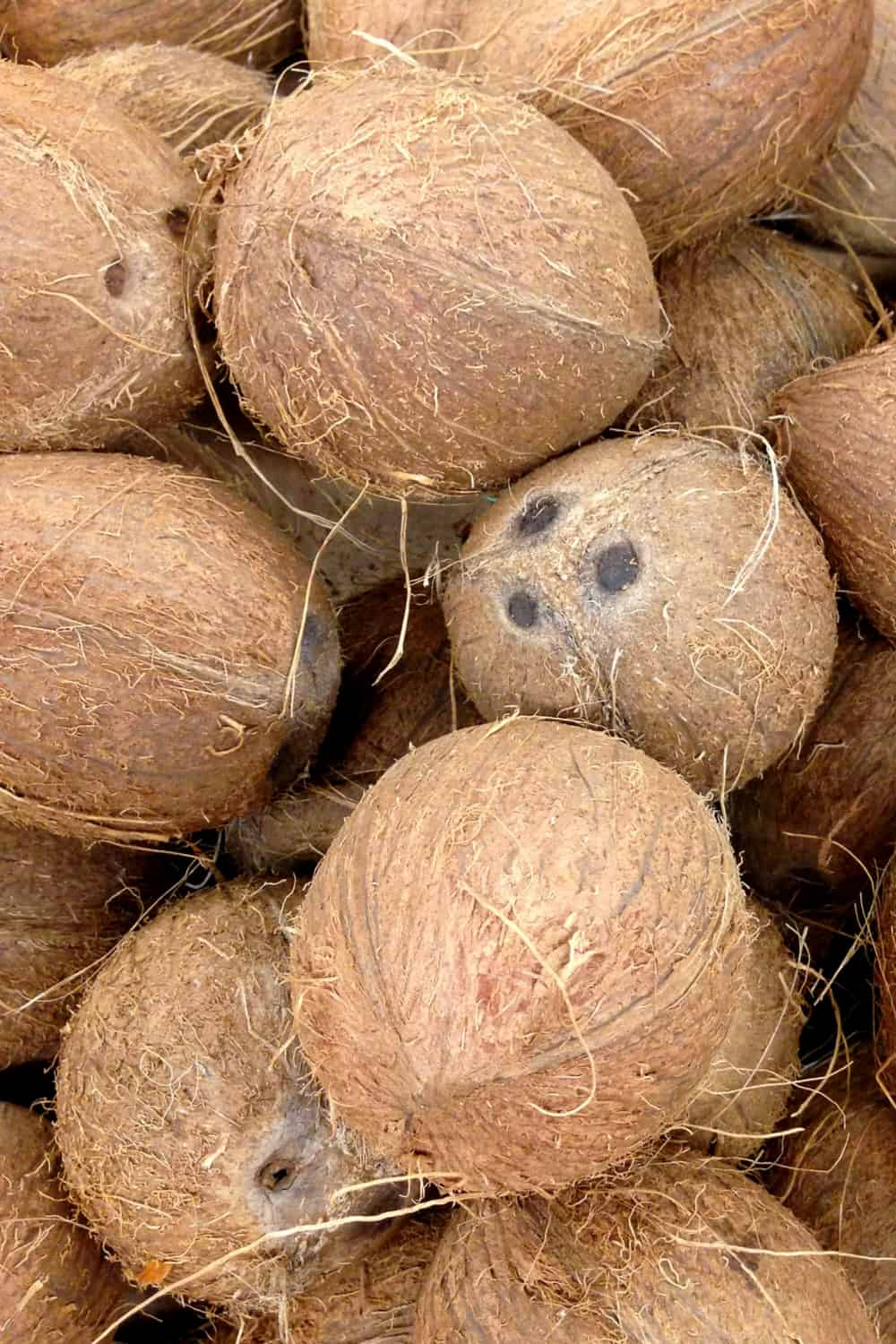Does Coconut Go Bad How Long Does Coconut Last