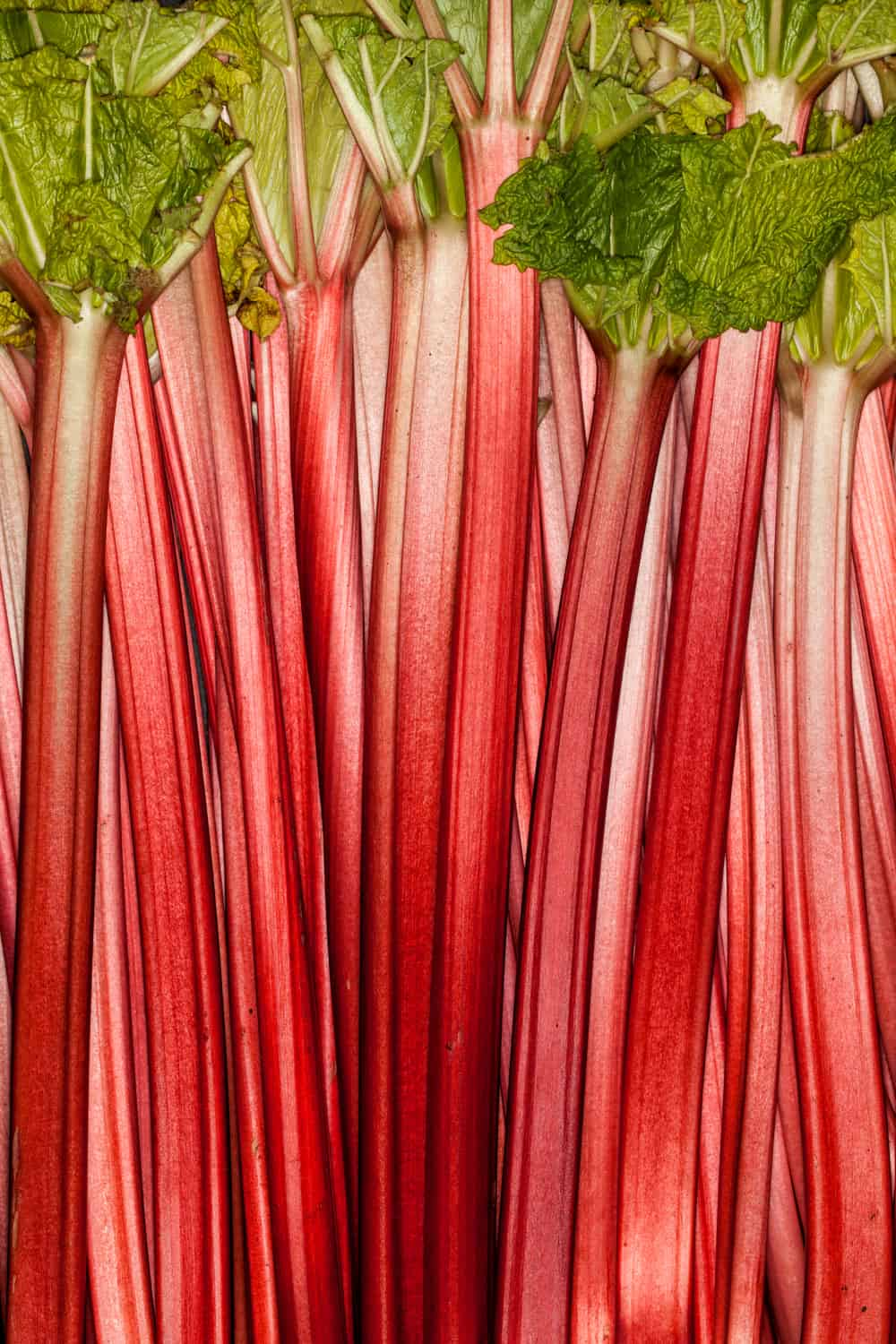 Does Rhubarb Go Bad How long does It Last