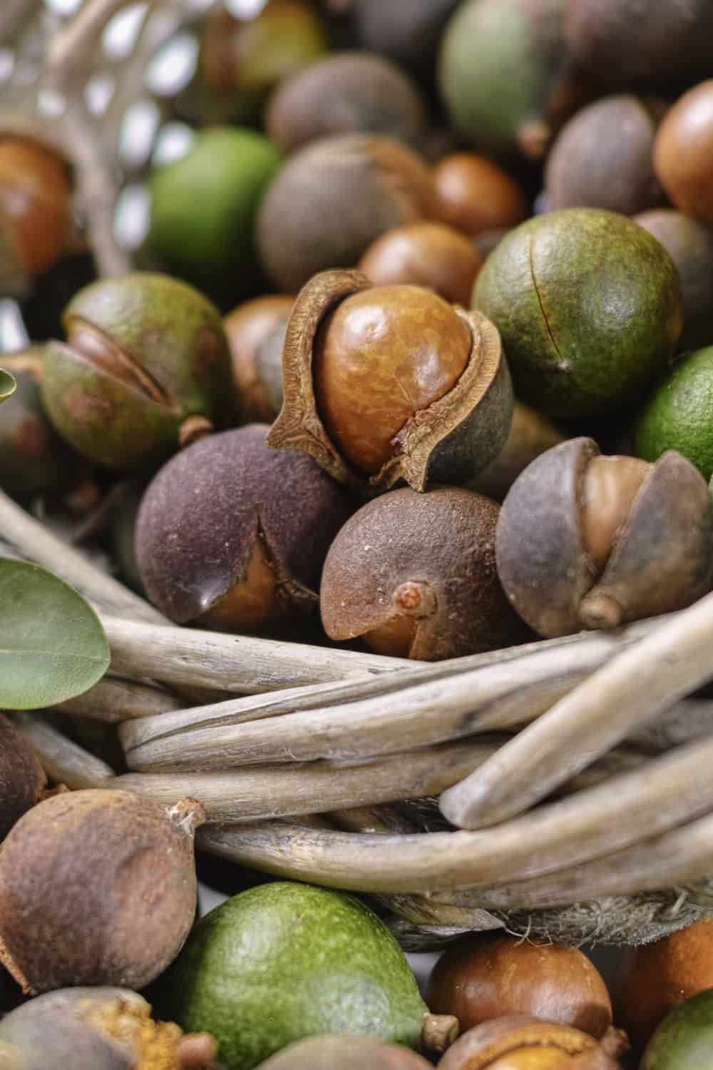 How to Tell If Macadamia Nuts Have Gone Bad