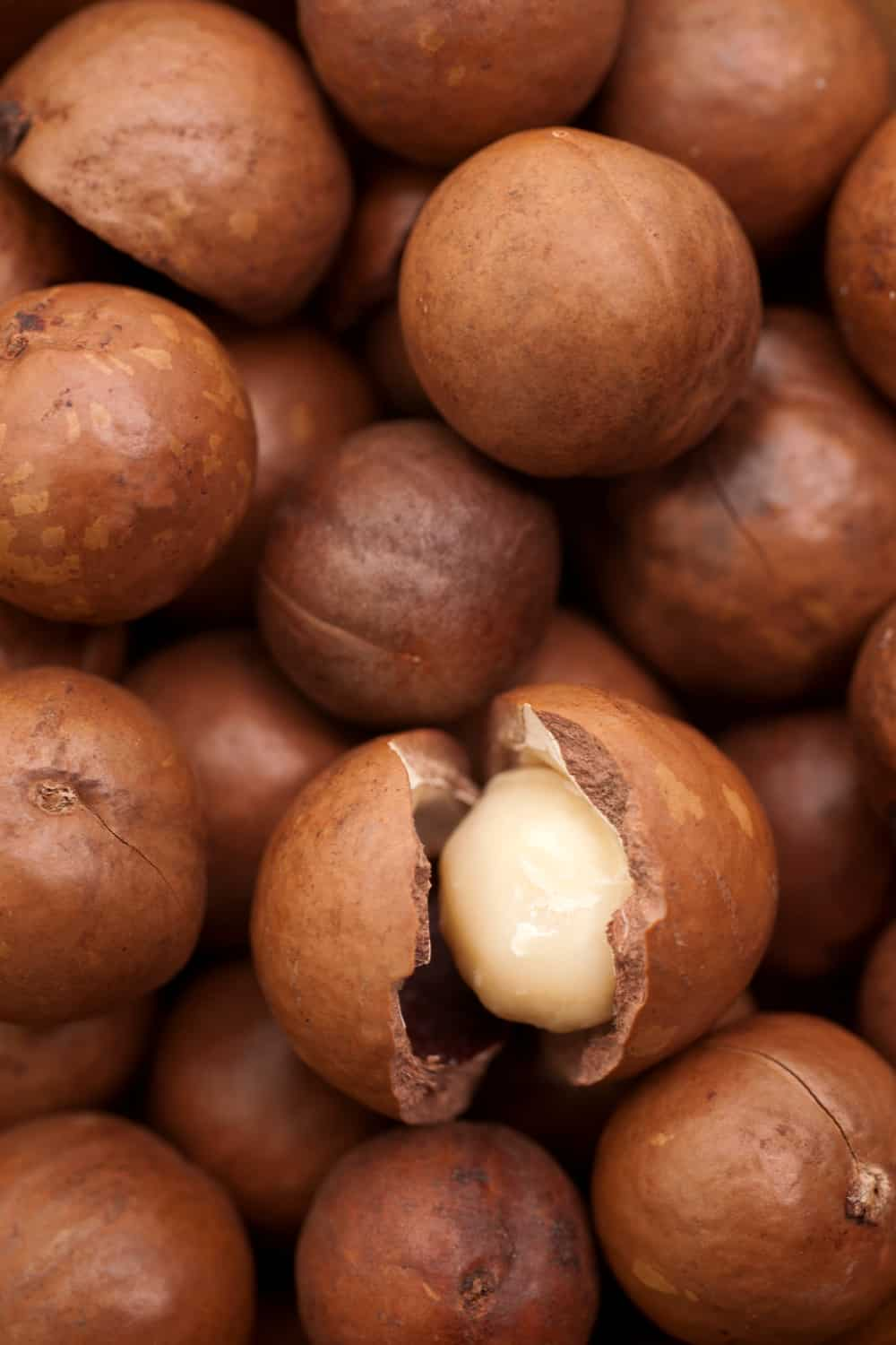 The Risk of Consuming Expired Macadamia Nuts