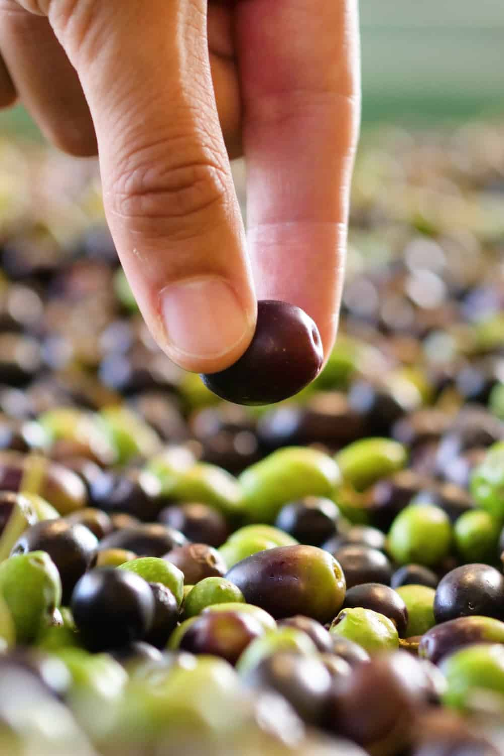 Tips to tell if olives have gone bad