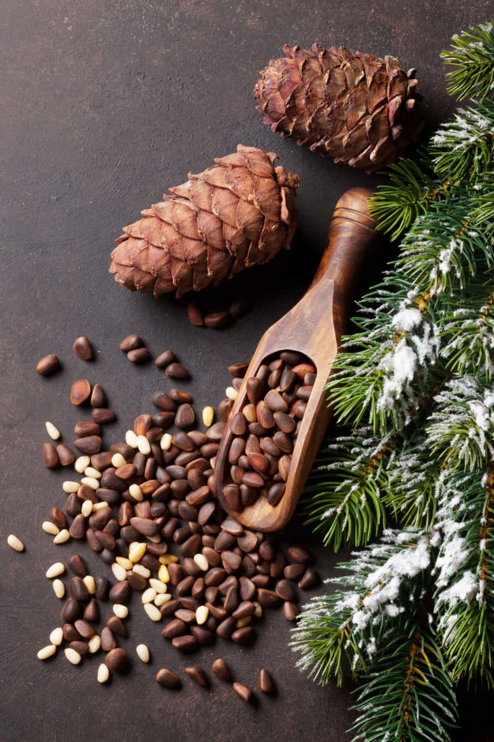 Tips to Store Pine Nuts